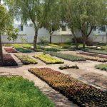 Aumenta producción de plantas el Vivero Municipal
