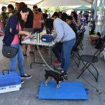 Realizan primera mega jornada de esterilización de mascotas