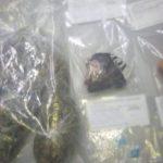Detenidos 4 narcomenudistas
