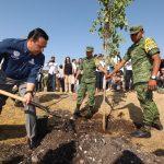 Respira Querétaro sembrará 240 mil árboles