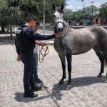 Detenido por robar una yegua