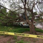 Cae árbol en El Tintero