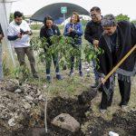 Facultad de Informática de la UAQ realiza jornada de Reforestación