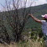 10 especies de Murciélagos en la ciudad. Hay presencia en el Parque Querétaro 2000