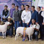 Rancho La Cruz de Mayo gana en Ovinos