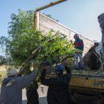 Realizarán campaña de recolección de árboles navideños en El Marqués