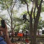 Realizan 5to Campeonato de Trepa Árboles en Querétaro