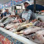 Destruyen 40 kg de mariscos en mal estado en Querétaro