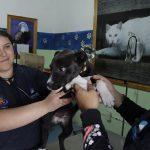 Promueve UCPA de Corregidora servicios para el cuidado de mascotas