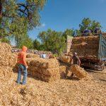 El Marqués inicia entrega de apoyos al sector agropecuario