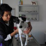 Se mantiene el trabajo de Protección, Cuidado y Control Animal