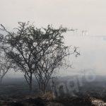 Movilización por incendio de pastizal en zona industrial de Jurica