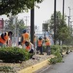 Avance del 70% en programa de reforestación de Paseo Constituyentes en Corregidora
