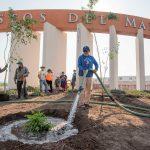 El Marqués continúa programa de reforestación