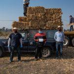 Continúa El Marqués entregando forrajes al sector ganadero