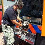 Registra Municipio de Querétaro 55 rescates exitosos de animales