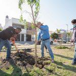 Lanza El Marqués programa de reforestación