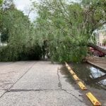 Torton derriba árbol en Avenida Coahuila