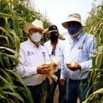 SEDEA impulsa estrategias para productores agrícolas del estado