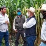 Secretaría de Desarrollo Agropecuario apuesta por tecnologías de alto rendimiento en maíz